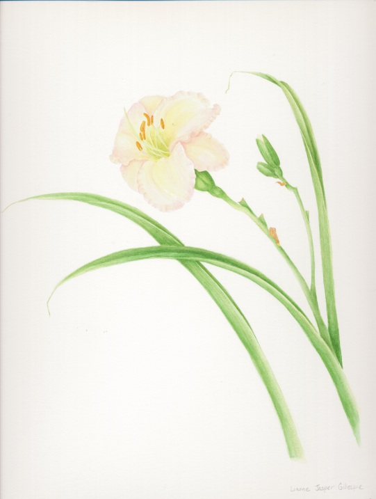 Day Lily in Watercolor