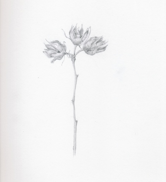 Dying Buds in Graphite
