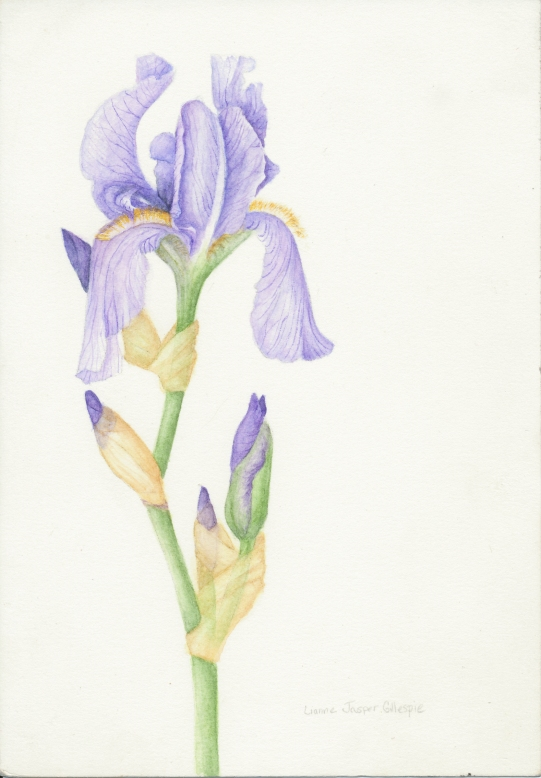 Iris in Watercolor