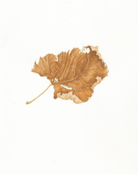 Dying Leaf in Watercolor